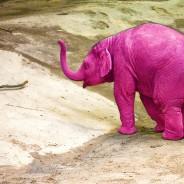 Denken Sie NICHT an einen rosa Elefanten!